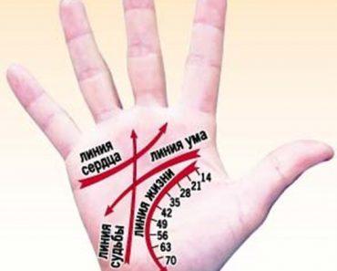 Линии на руке в хиромантии. Расшифровка и значение