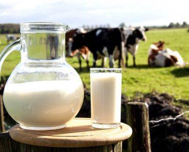 Коровье молоко домашнее детям и взрослым. Аллергия на белок и непереносимость молока