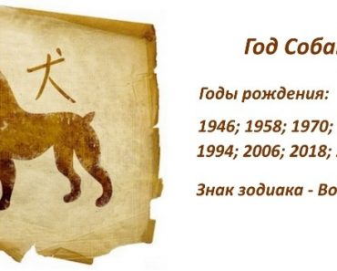 Знак Собаки - характеристика человека (мужчины и женщины), рожденных в этот год. Восточный гороскоп