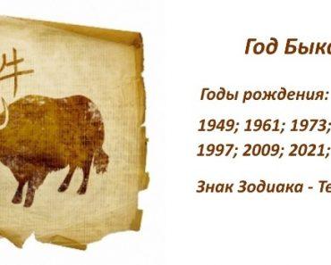 Знак Бык (Вол) - характеристика человека (мужчины и женщины), рожденных в год Быка (Вола). Восточный гороскоп