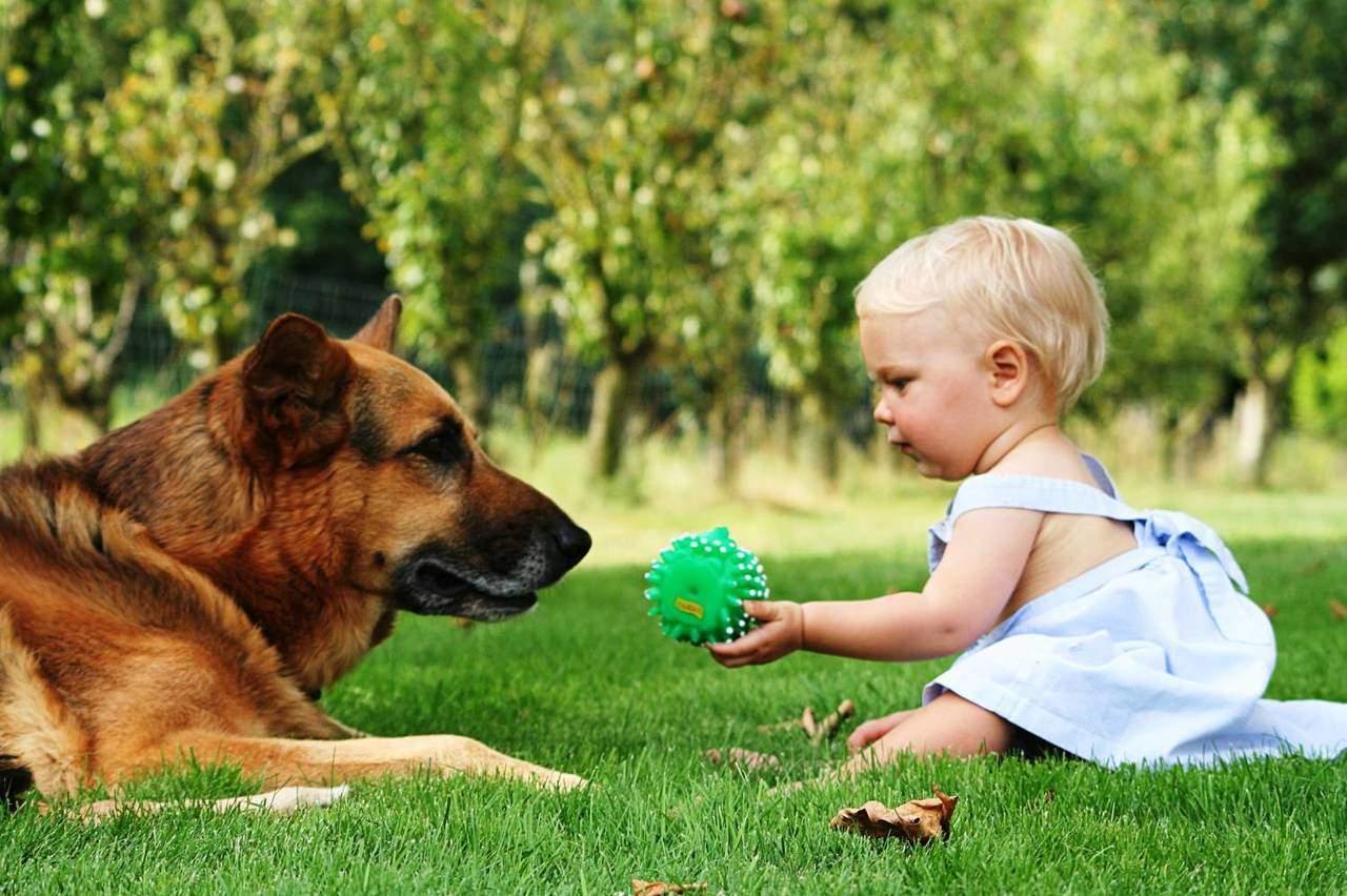 Домашние животные для детей - собаки