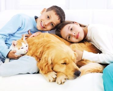 Домашние животные для детей и для ребенка 3, 4, 5, 6, 7 лет. Какой питомец лучше: кошка,собака, попугай, хомяк