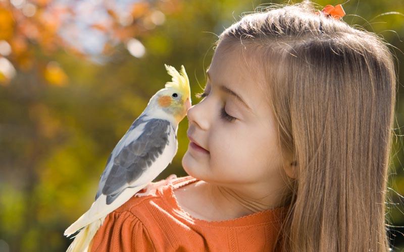 Домашние животные для детей - попугай