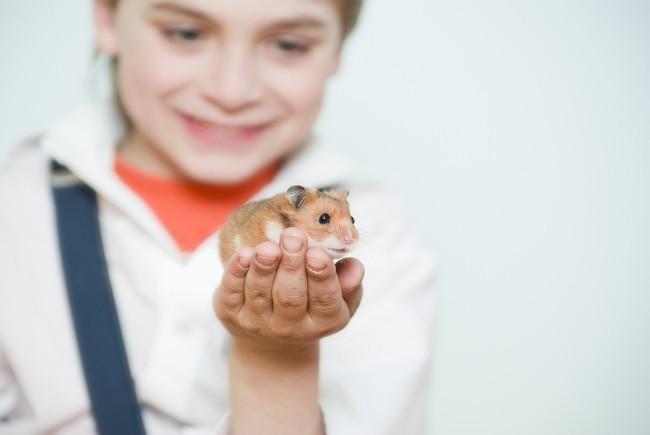 Домашние животные для детей - хомяки