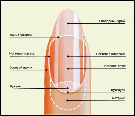 Форма ногтя - какую выбрать
