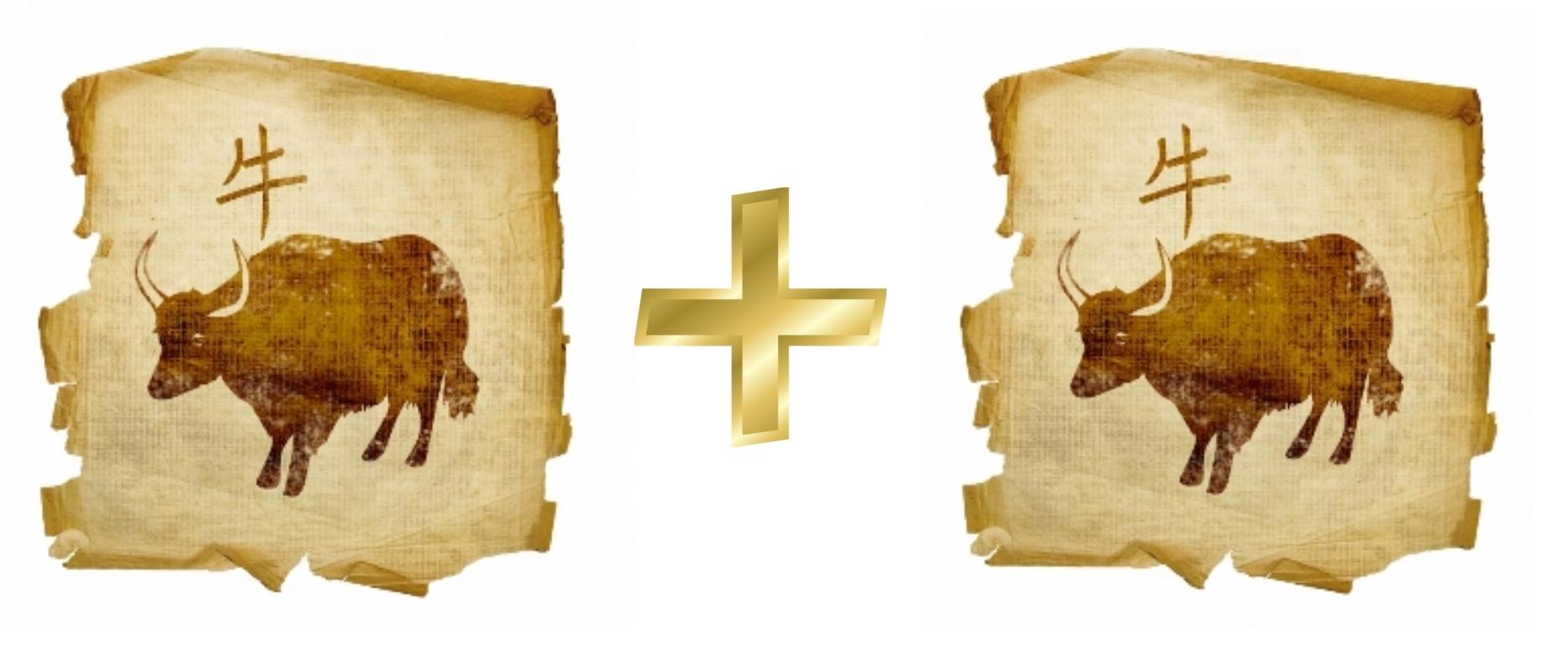 Бык и Бык (Вол): Гороскоп любовной совместимости по знакам
