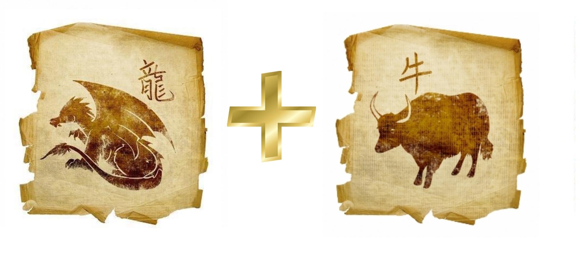 Дракон и Бык (Вол): гороскоп совместимости в любви