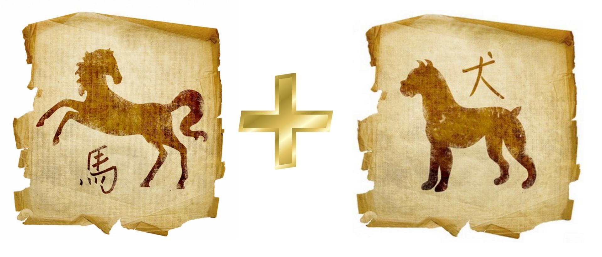 Лошадь и Собака: гороскоп совместимости в любви