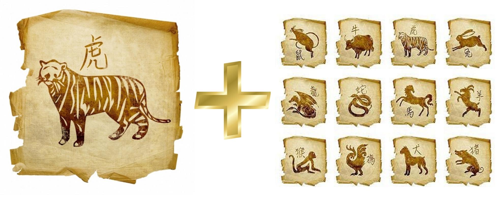 Тигр: гороскоп совместимости мужчины и женщины в любви с другими знаками. Тигр и Тигр, Крыса, Свинья, Собака, Лошадь, Петух, Обезьяна, Коза (Овца), Змея, Дракон, Кролик, Бык