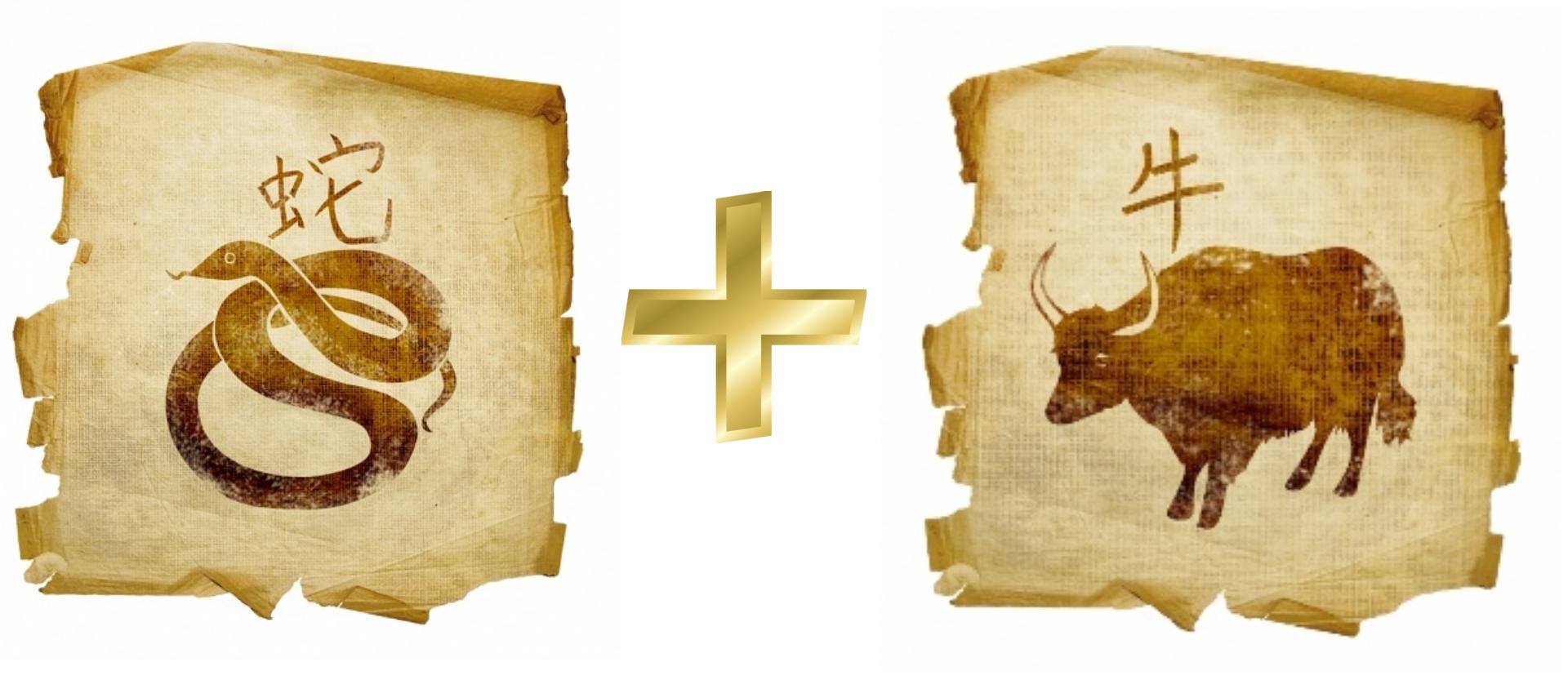 Змея и Бык: гороскоп совместимости в любви