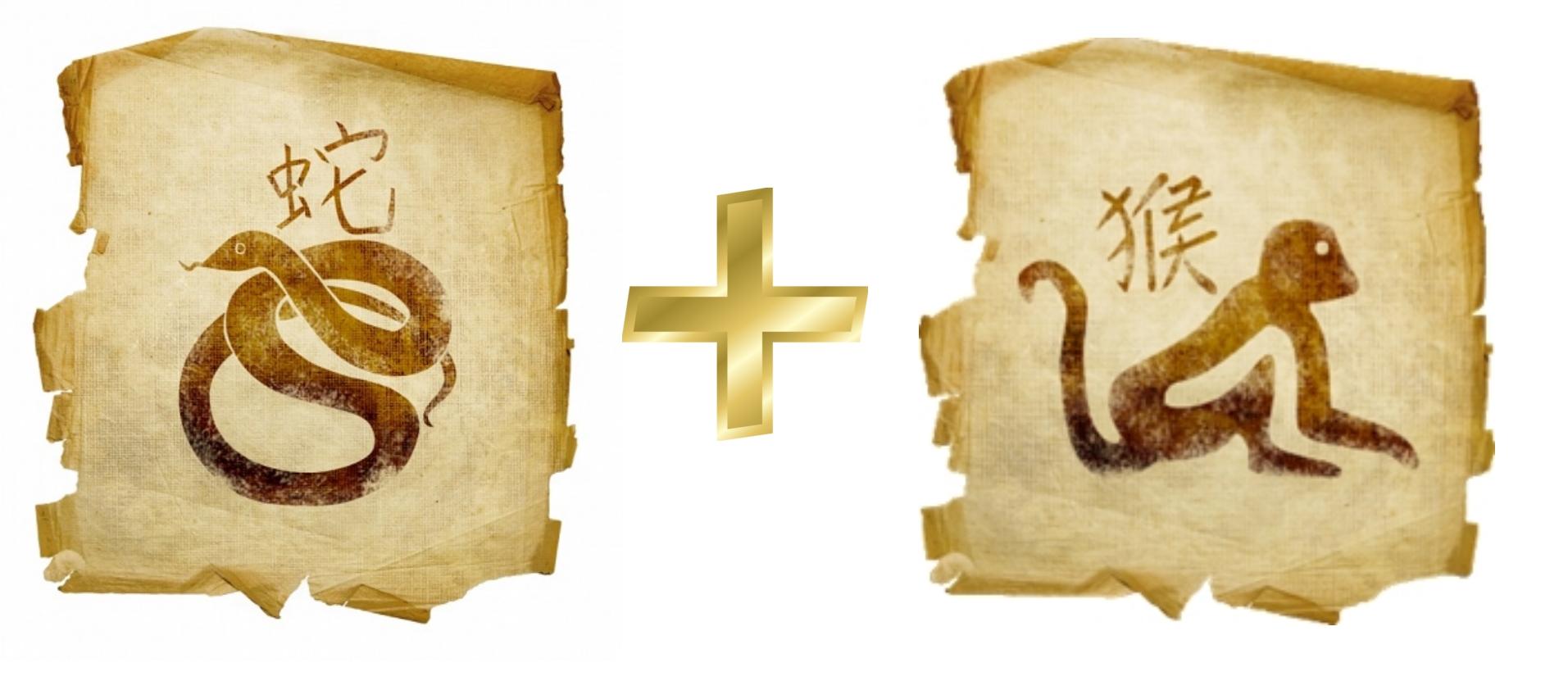 Змея и Обезьяна: гороскоп совместимости в любви