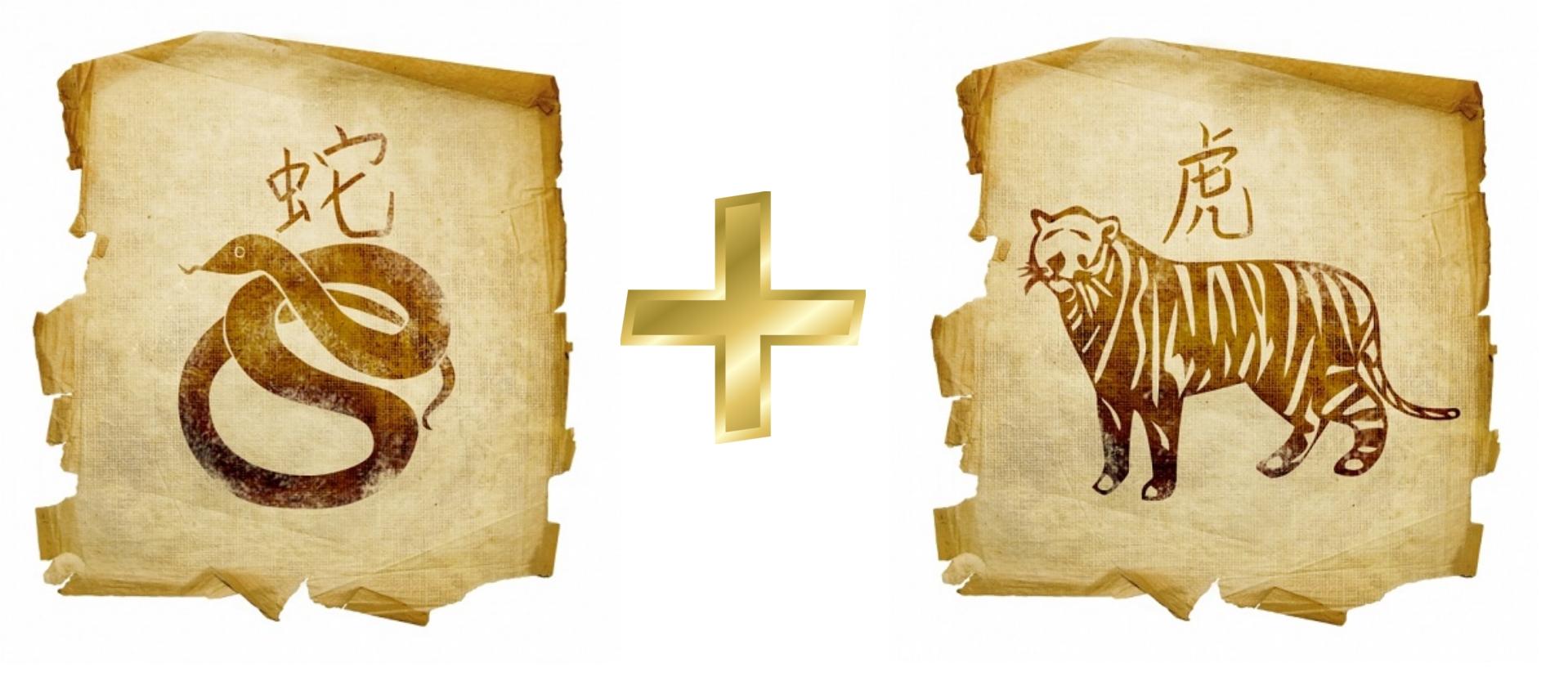 Змея и Тигр: гороскоп совместимости в любви