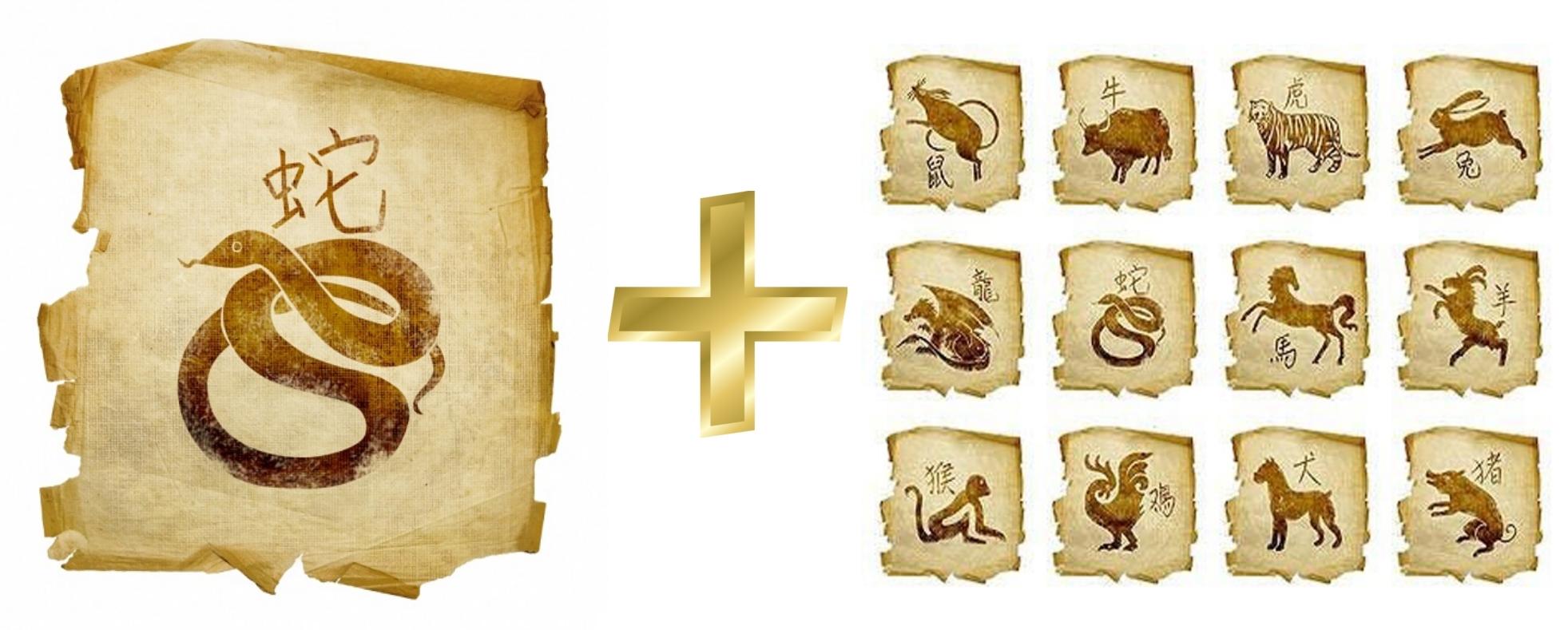 Змея: гороскоп совместимости мужчины и женщины в любви с другими знаками. Змея и Тигр, Крыса, Свинья, Собака, Лошадь, Петух, Обезьяна, Коза (Овца), Змея, Дракон, Кролик, Бык