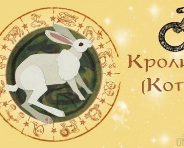 Мужчина Кролик (Заяц, Кот) в любви. Характеристика и гороскоп рожденных в этот год
