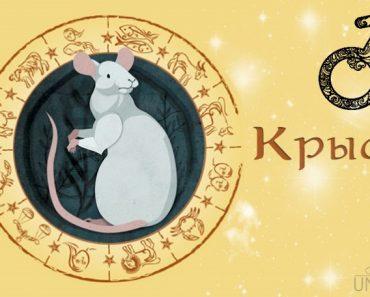 Мужчина Крыса (Мышь) в любви. Характеристика и гороскоп рожденных в этот год