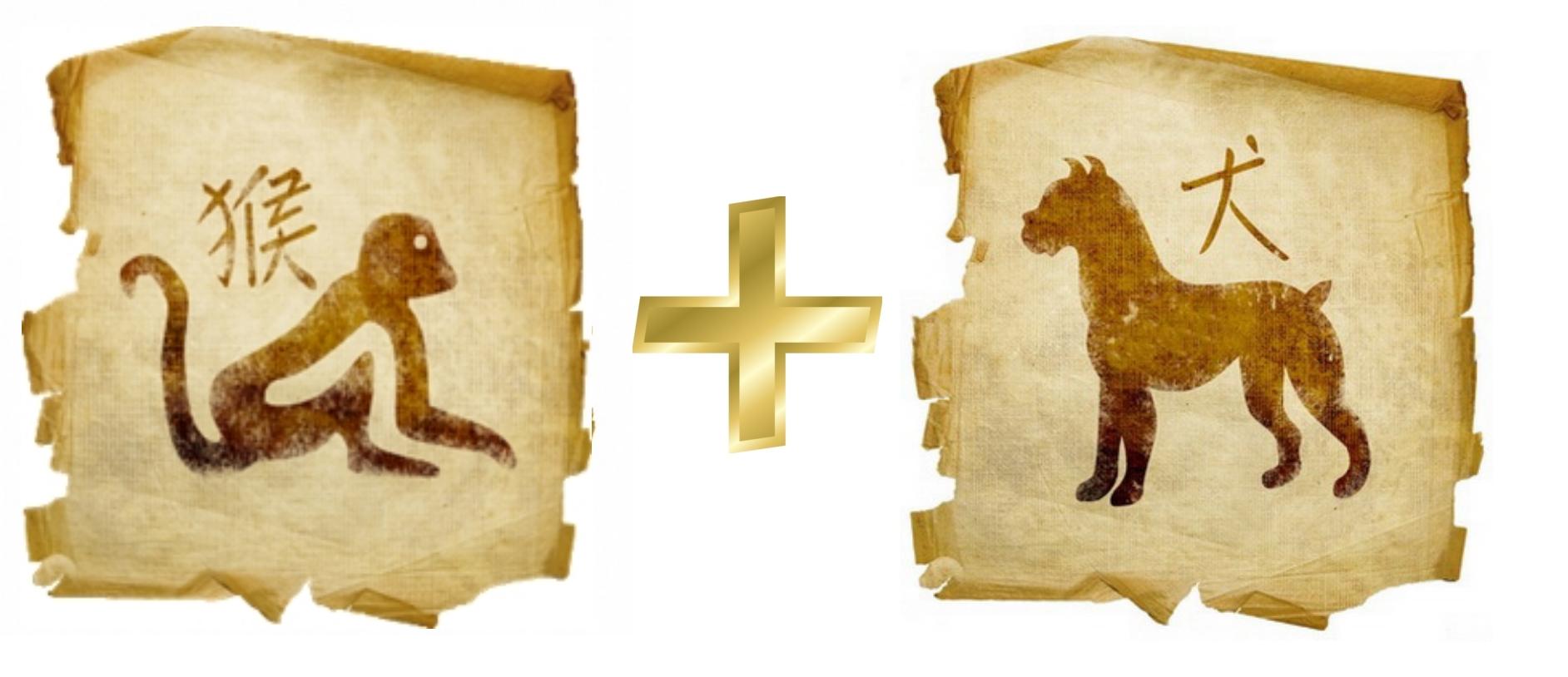 Обезьяна и Собака: гороскоп совместимости в любви