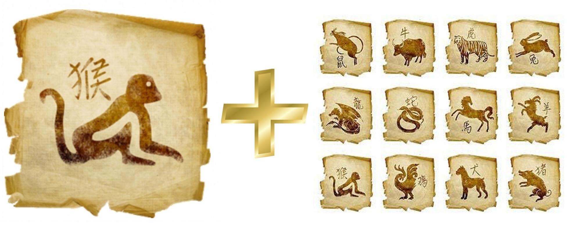 Обезьяна: гороскоп совместимости мужчины и женщины в любви с другими знаками. Петух и Тигр, Крыса, Свинья, Собака, Лошадь, Петух, Обезьяна, Коза (Овца), Змея, Дракон, Кролик, Бык (Вол)