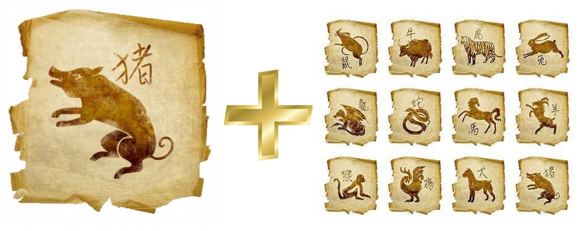Свинья (Кабан): гороскоп совместимости мужчины и женщины в любви с другими знаками. Свинья и Тигр, Крыса, Свинья, Собака, Лошадь, Петух, Обезьяна, Коза (Овца), Змея, Дракон, Кролик, Бык