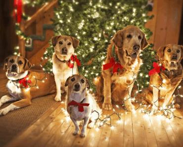 Год Собаки 2018: в чем встречать, что готовить на стол. Характеристика года. Мужчина и женщина Собака