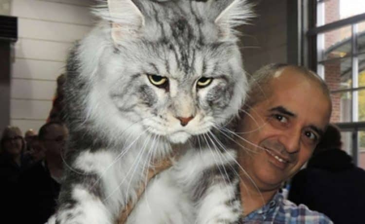 Как ухаживать за кошкой