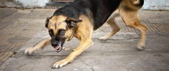 Собака нападает на взрослых людей и ребенка - что делать