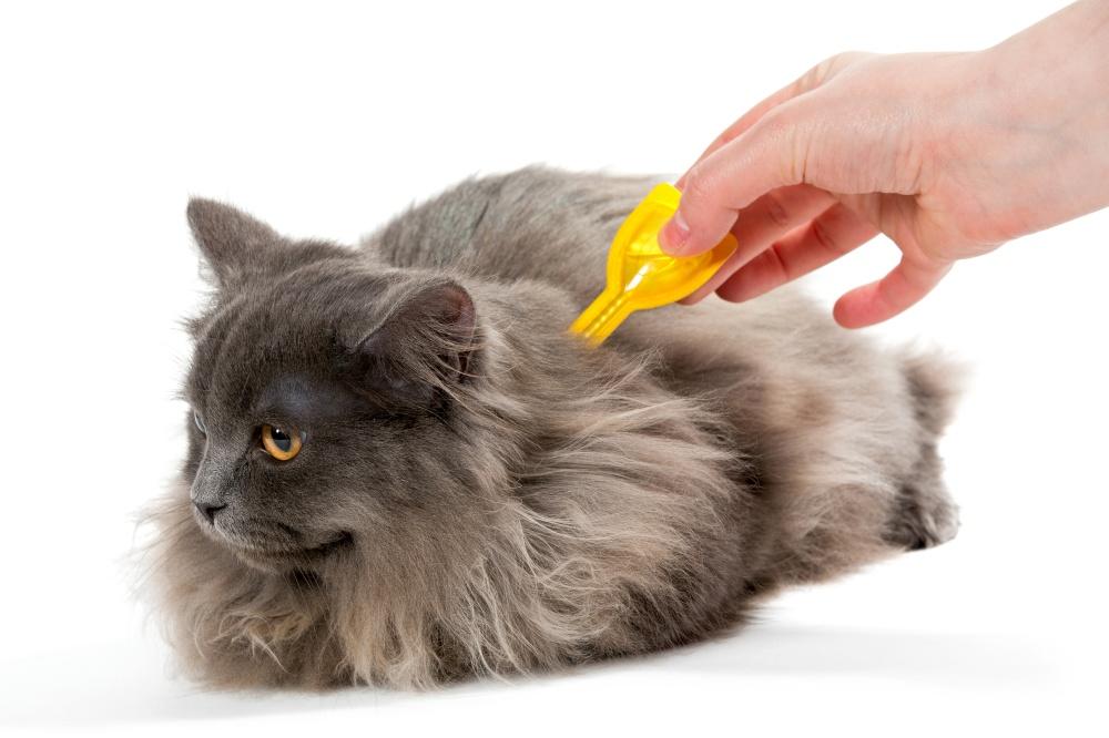 Серый кот и капли от блох