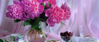 букет розовых хризантем в вазе