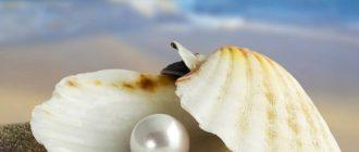 Жемчужина в раковине на берегу моря