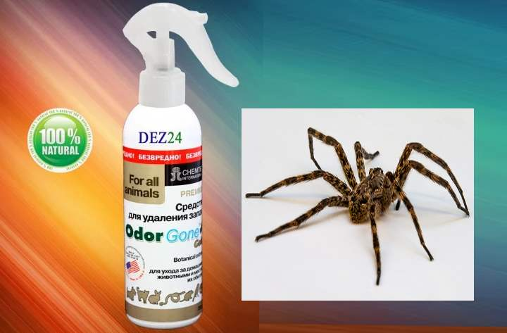 Спрей от пауков