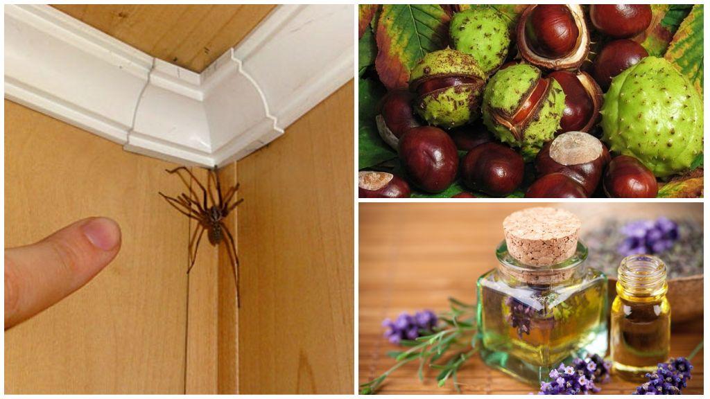 Каштаны и эфирное масло для борьбы с пауками