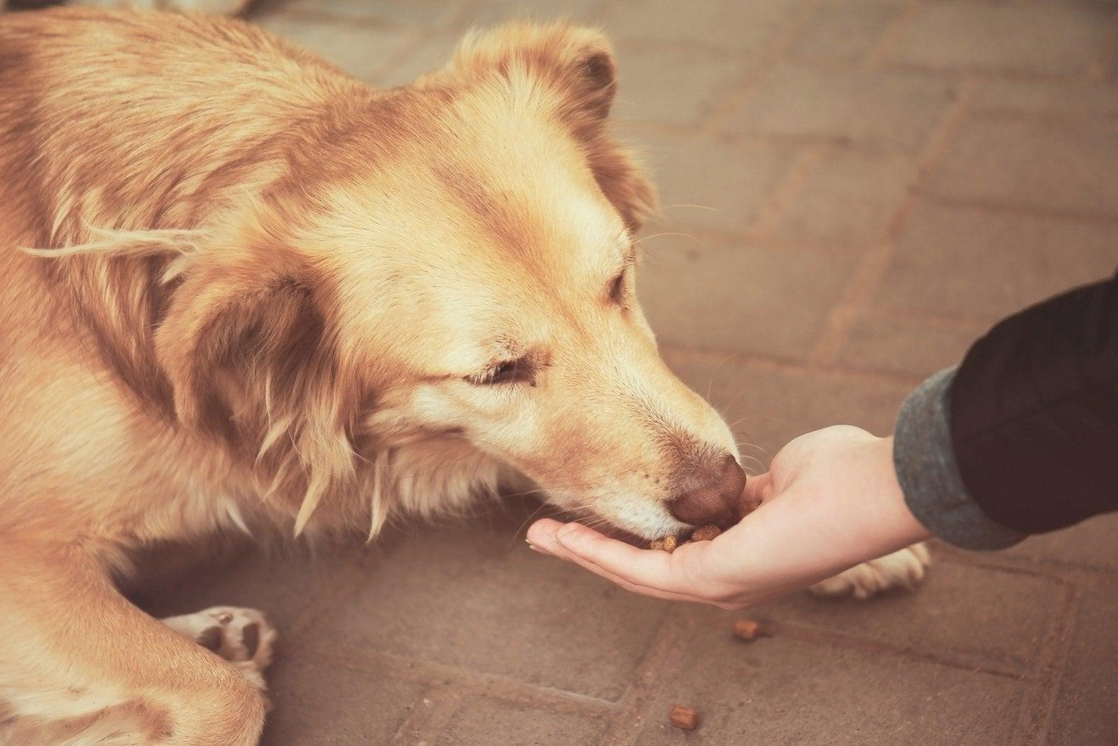 собака ест с руки