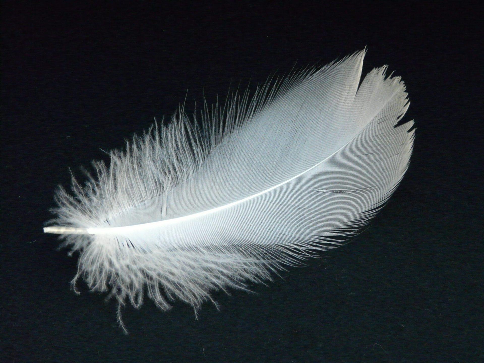 перо птицы белое на черном фоне