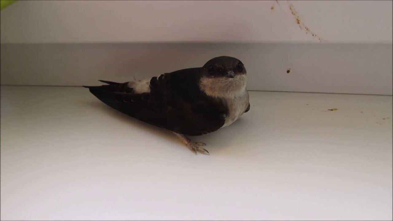Птица на подоконнике