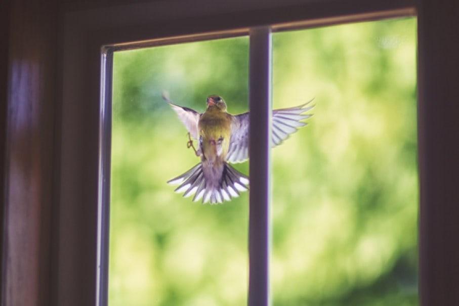 Птица около окна