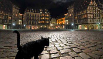 черный кот идет по мостовой